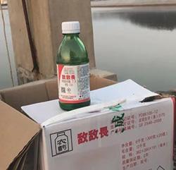 食品安全堪忧 养海参整箱放敌敌畏